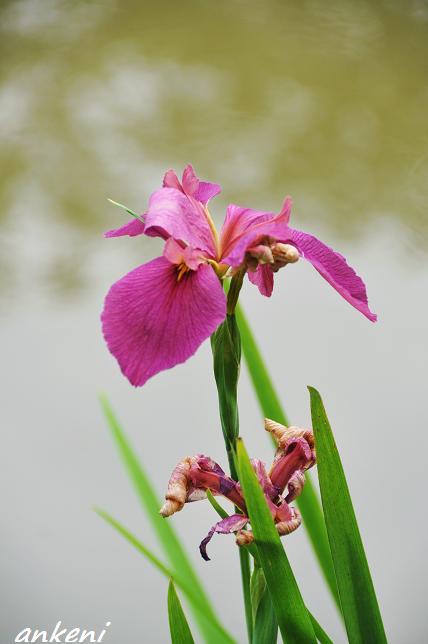 038  花