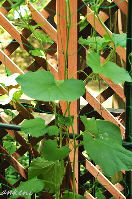 005  植物