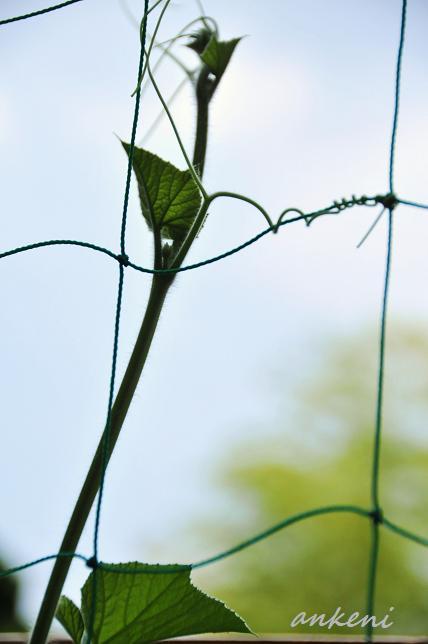 010  植物