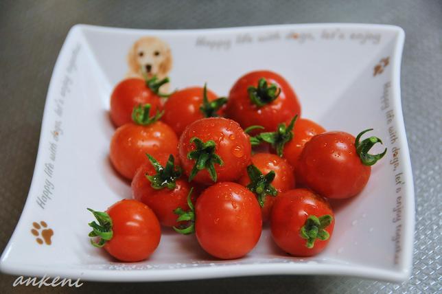 017  ミニトマト