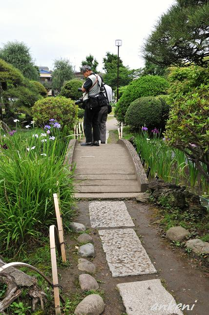 041  堀切菖蒲園