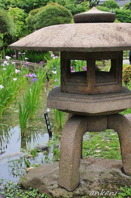 084  菖蒲園