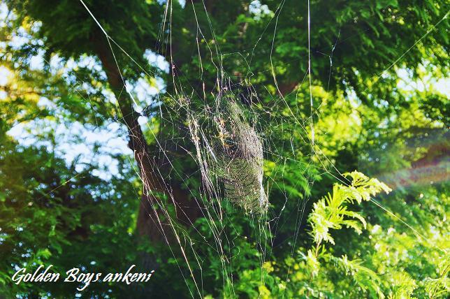 048  蜘蛛の巣
