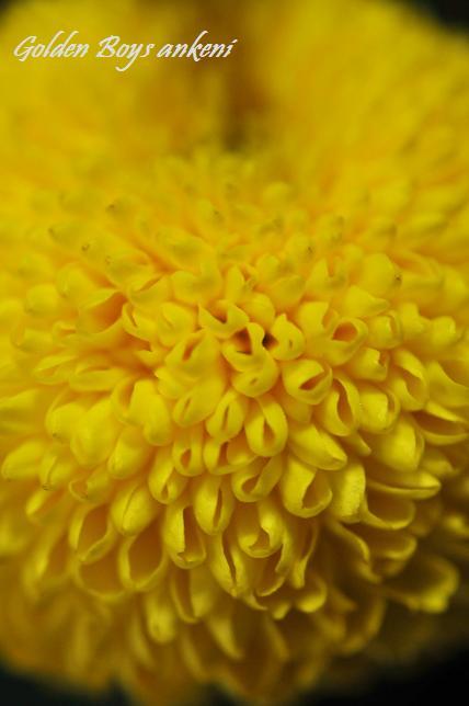 163  植物