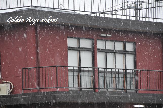 184  雪