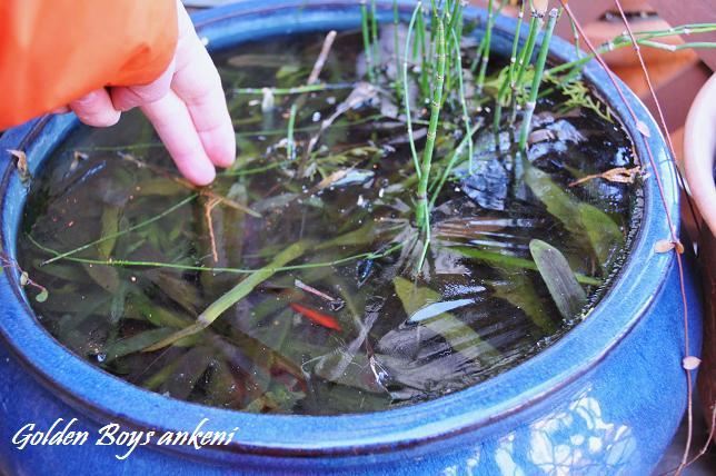 002  金魚鉢