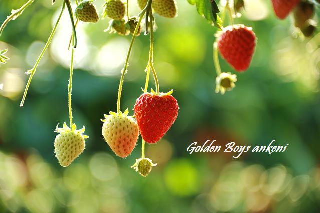 024  イチゴ