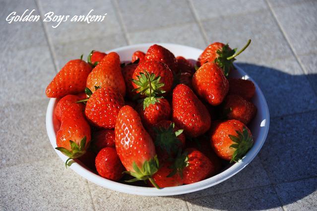 046  イチゴ