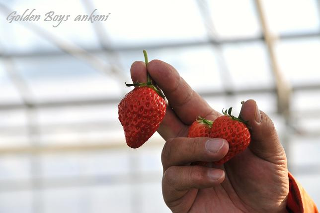 198  イチゴ
