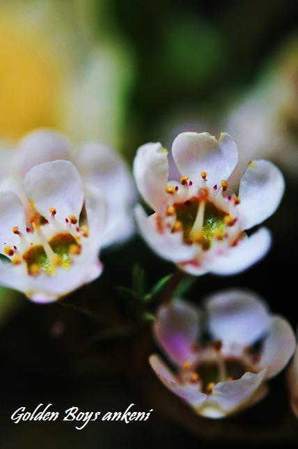 039 お花