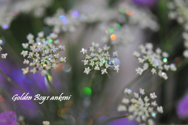 186  お花