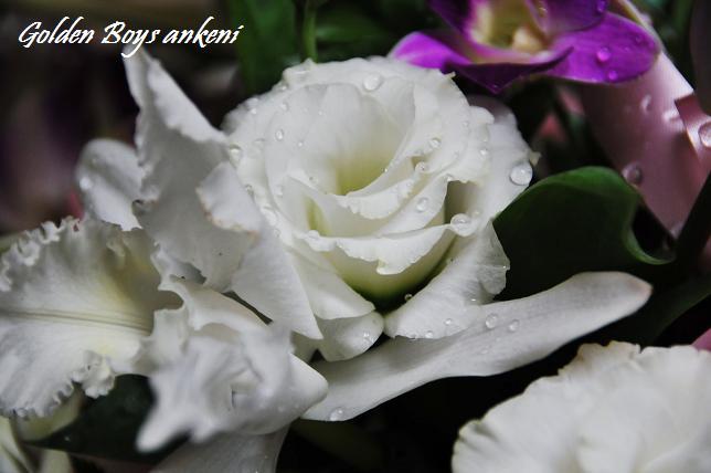 141  お花