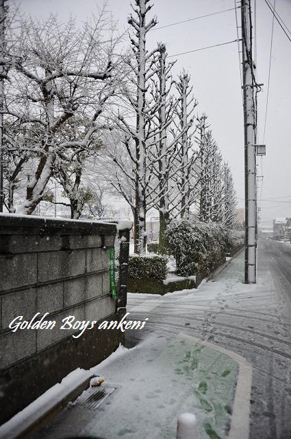 037  雪景色