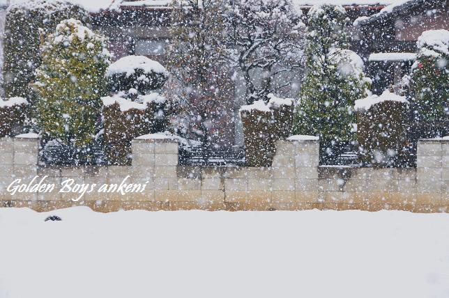 166  雪