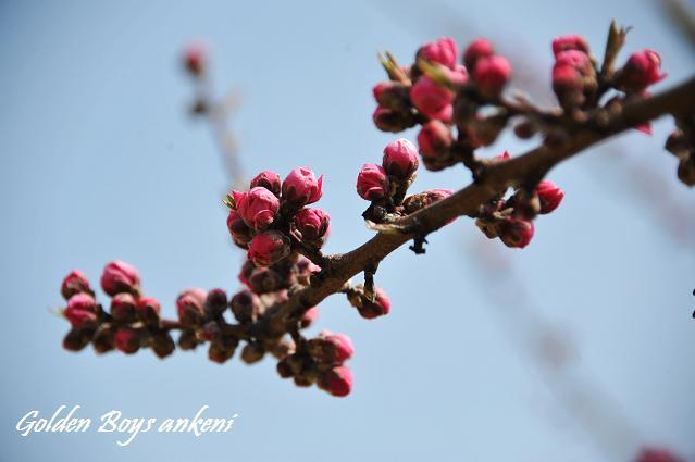 022  植物