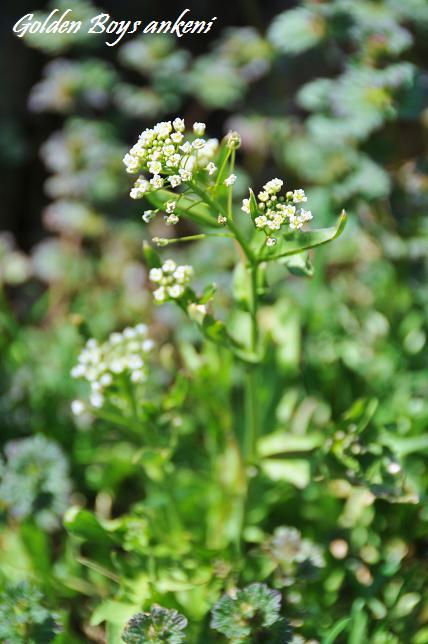 017  植物