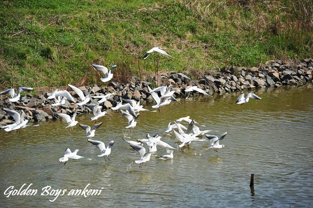 134  野鳥