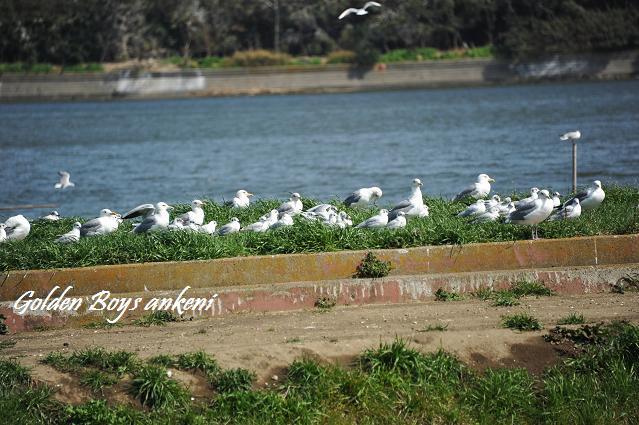 140  野鳥