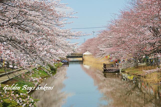 008  桜並木