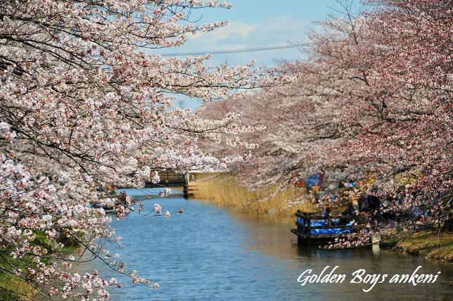 001  桜並木