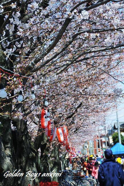 002  桜並木