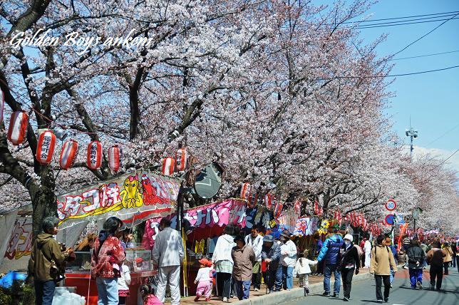 007  桜祭り