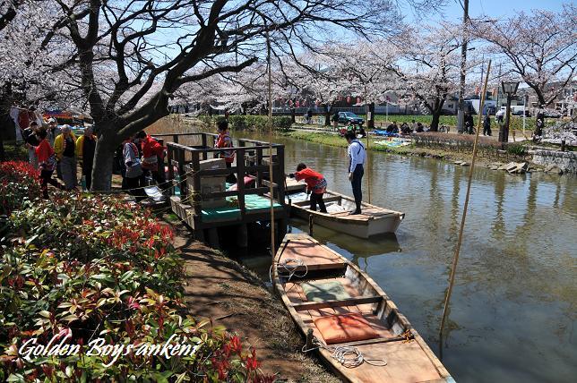 026  桜祭り