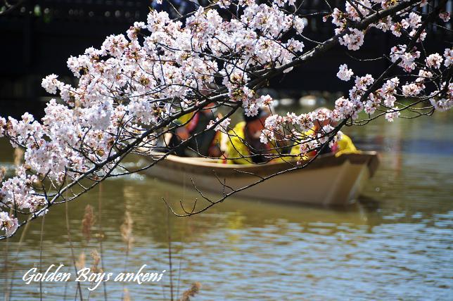 039  桜祭り