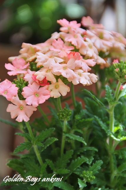 236  植物
