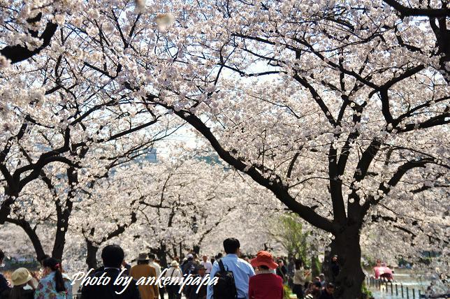 173  上野公園
