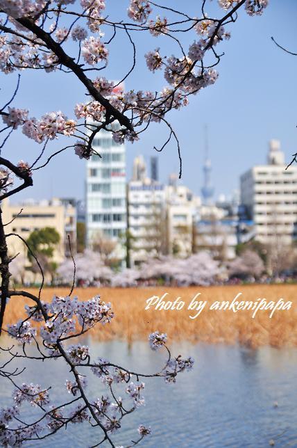 182  上野公園