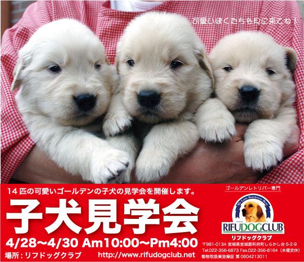 puppies-show  リフドッグクラブ