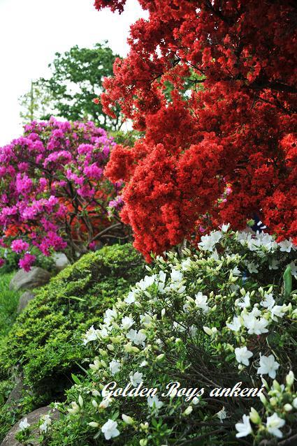 271  植物