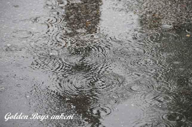 081  雨