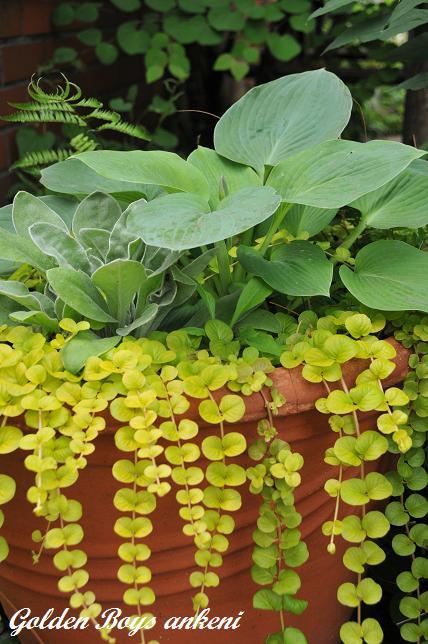 020  植物
