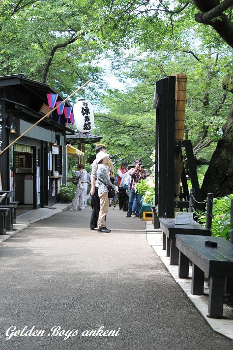 016  権現堂公園