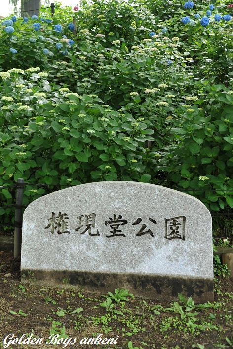 391  権現堂公園