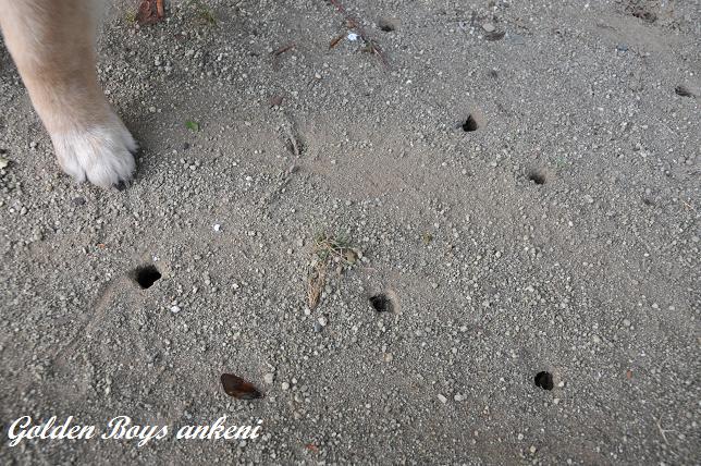 004  セミの穴