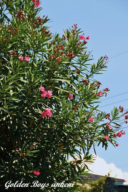 166  植物