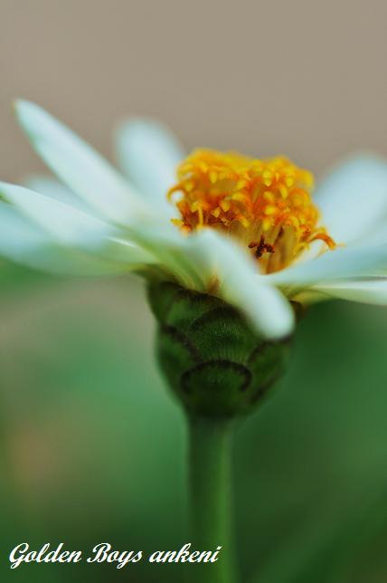 287  植物