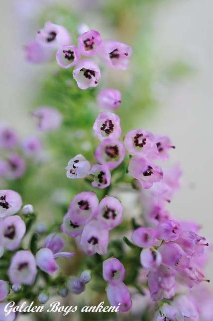 293  植物