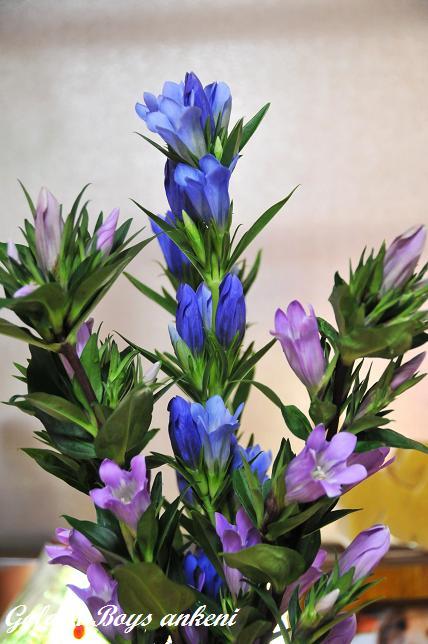 153  お花