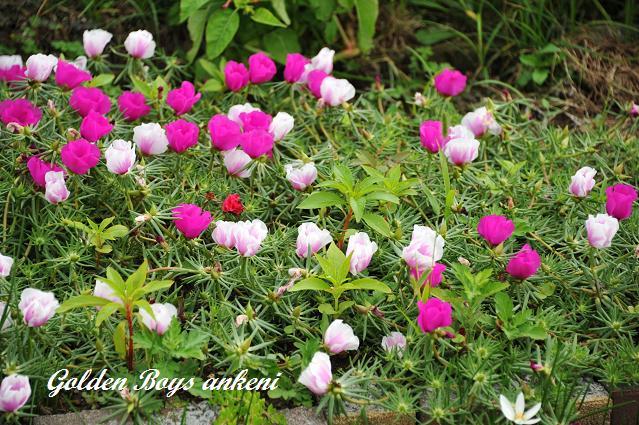 180  植物