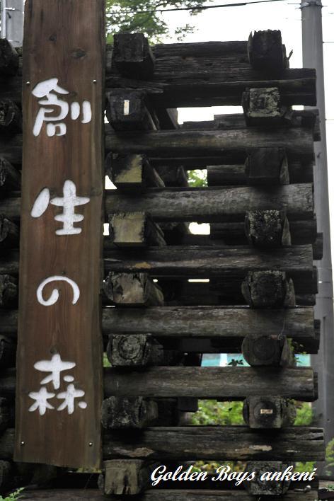 238  創生の森