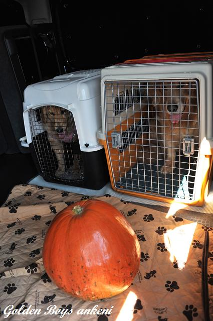 412  かぼちゃ
