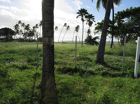 56 2014 ハワイ観光2 43億