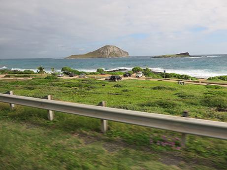 62 2014 ハワイ観光8 サメのヒレ