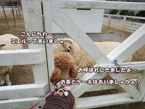 201201296364a.jpg