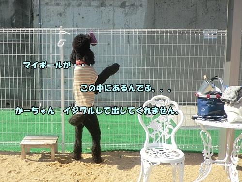 201202197204.jpg