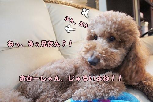 201203080922d.jpg